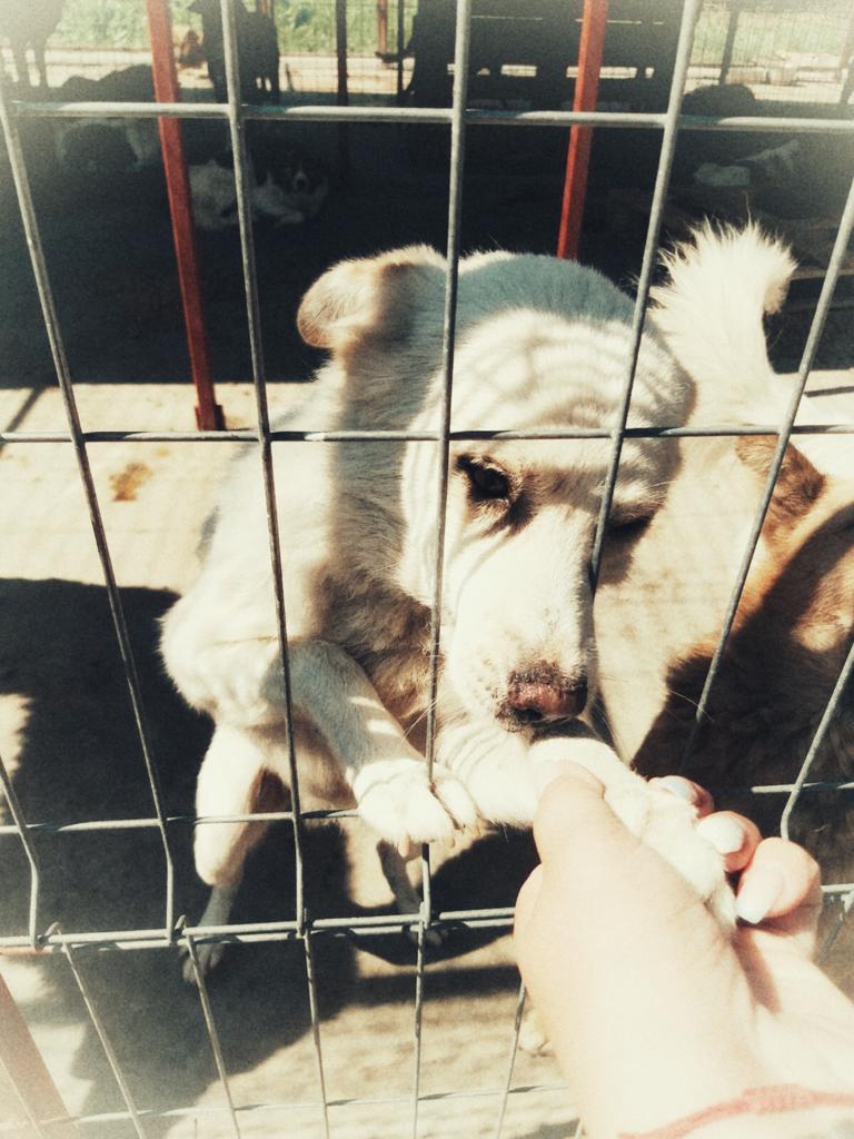 adoptii caini 12.07 (1)